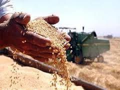 واریز نخستین مرحله از بهای گندم کشاورزان در استان اردبیل
