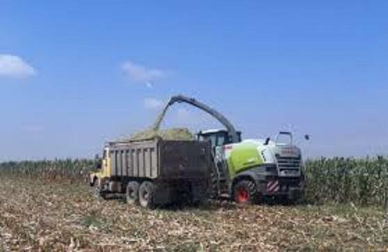 فرماندار شهرستان پارس آباد گفت: پیشبینی تولید بالای ۲۰۰ هزار تن محصول ذرت علوفه ای در شهرستان پارس آباد