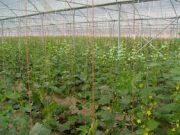 بزرگترین شهرک گلخانه ای کشور در پارس آباد احداث می شود