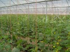 شهرستان پارسآباد به قطب کشت گلخانهای کشور تبدیل میشود