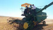 برداشت محصولات مزارع دیم در کشت و صنعت پارس آغاز شد