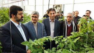 ایجاد اشتغال ۱۰۰۰ نفر در بزرگترین شهرک گلخانه ای کشور در پارس آباد