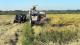 برداشت برنج از شالیزارهای پارسآباد مغان آغاز شد